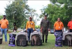 Director de la Defensa Civil entrega canes a Santiago, San Pedro de Macorís y Valverde