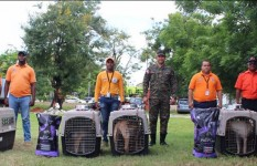 Director de la Defensa Civil entrega canes a Santiago, San Pedro de...